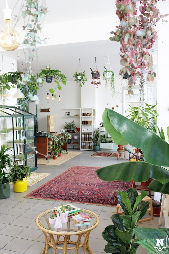 The Plant Corner